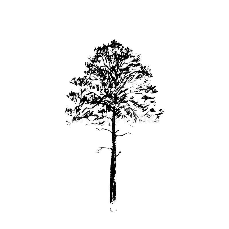 вал сосенки озера baikal предпосылки Черная линия чертеж изолированный на белой предпосылке Нарисованная рукой иллюстрация вектор иллюстрация вектора