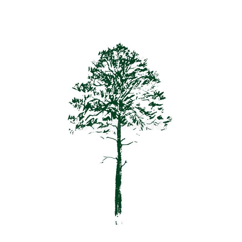 вал сосенки озера baikal предпосылки Чертеж зеленой линии изолированный на белой предпосылке Эскиз нарисованный рукой также векто иллюстрация вектора
