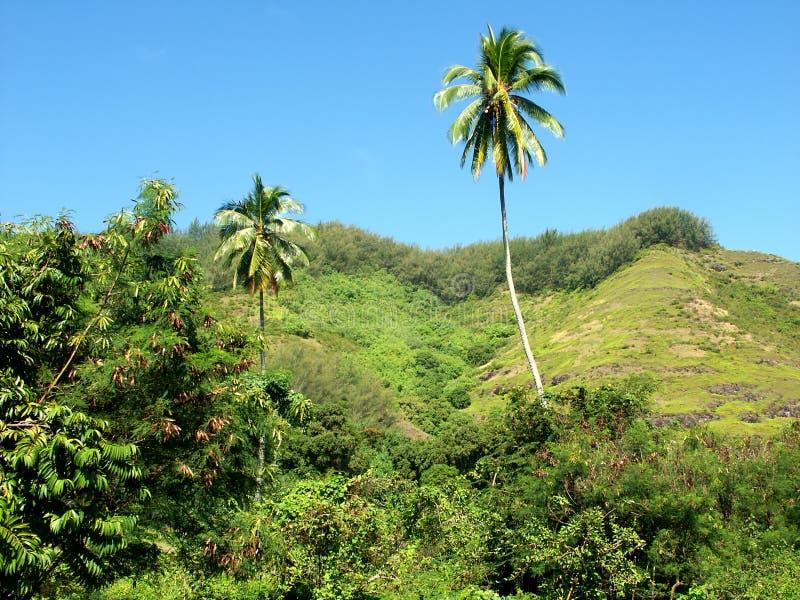 вал Таити ладони стоковые изображения rf