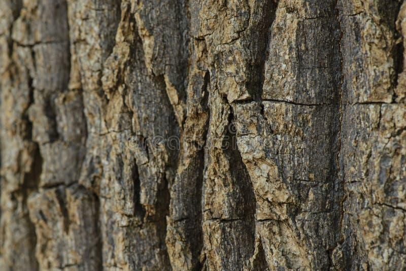 вал текстуры ладони расшивы стоковая фотография rf