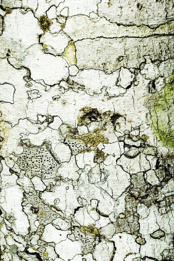 вал текстуры расшивы стоковые фотографии rf