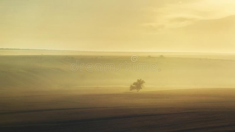 вал тумана сиротливый стоковые фотографии rf