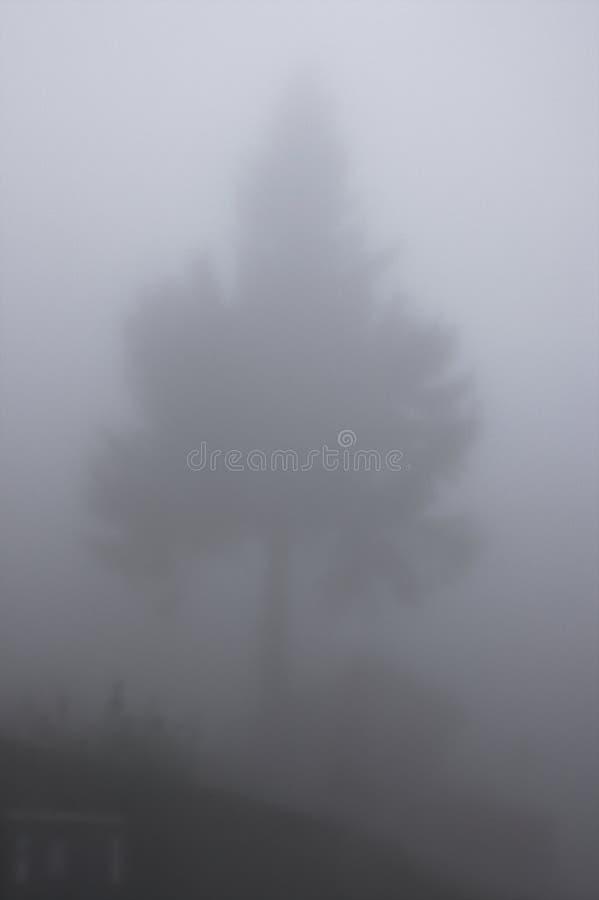 вал тумана стоковое фото rf
