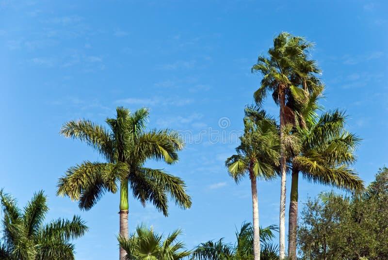 вал уединённых ладоней дня солнечный ветреный стоковое фото