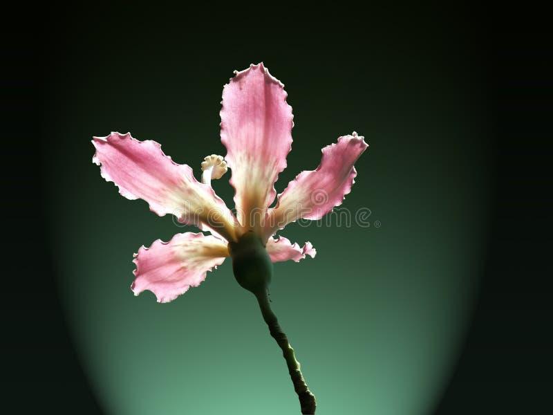 вал цветка зубочистки silk стоковая фотография