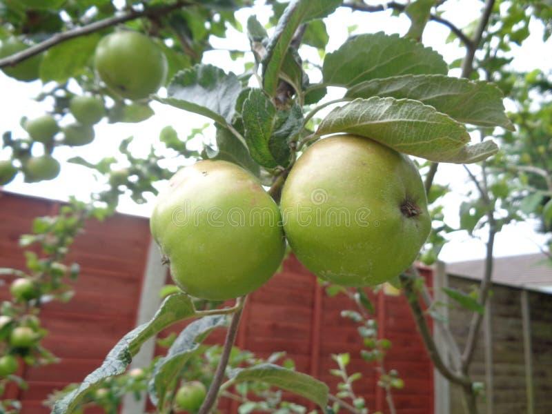 вал яблок зеленый стоковая фотография rf