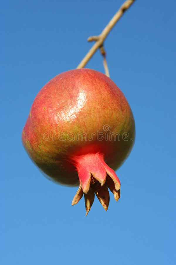 Download вал pomegranate стоковое изображение. изображение насчитывающей вкусно - 1195381