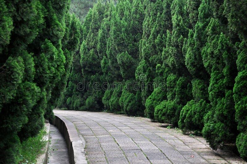 вал Surround путя сада кипариса Стоковое Изображение