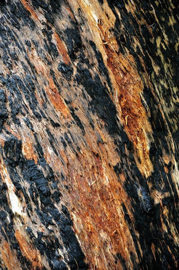 вал tingle расшивы Австралии гигантский западный стоковое фото rf