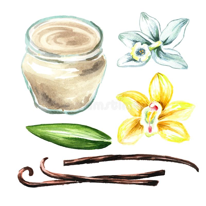 Ванильная сливк с набором цветка, лист и стручков Иллюстрация акварели нарисованная рукой, изолированная на белой предпосылке иллюстрация штока