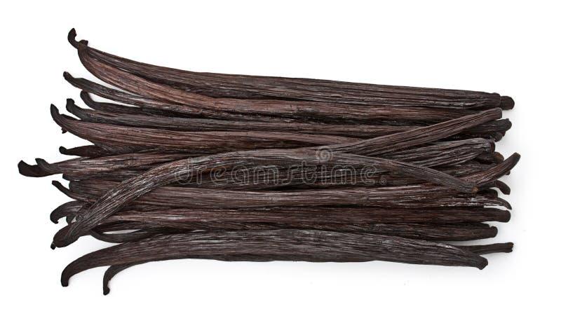 Ванильные стручки стоковое изображение