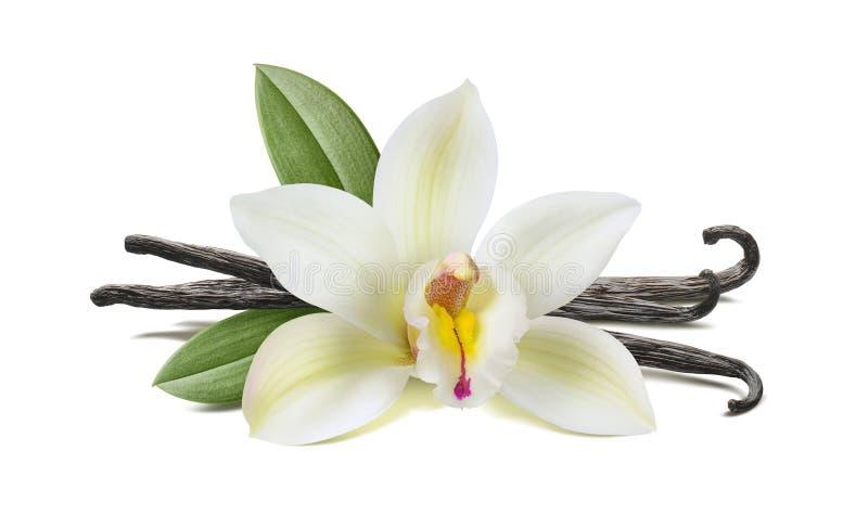 Ванильный цветок, стручки, листья на белизне стоковые изображения
