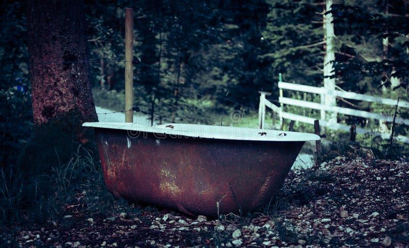 Ванна в древесинах стоковое фото