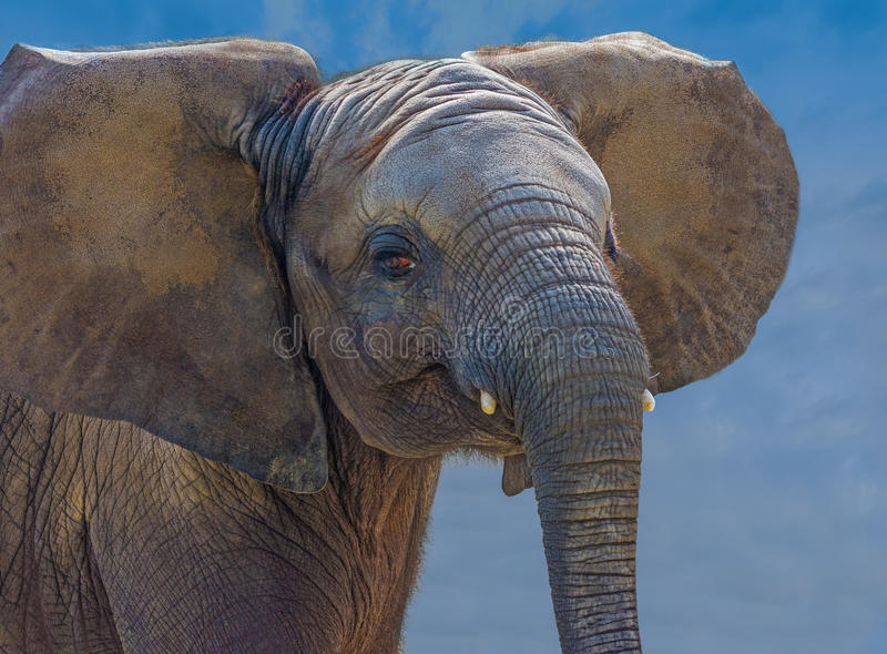 Ванна грязи слона стоковая фотография rf