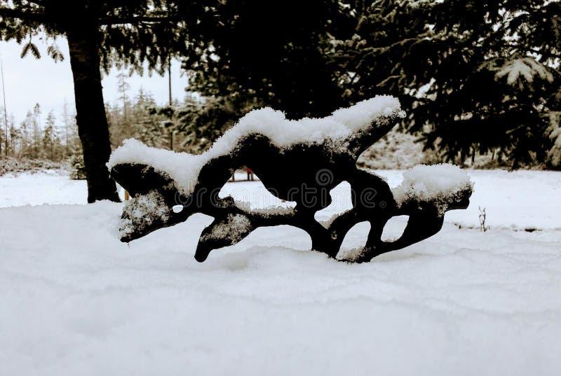 Ванна птицы Snowy стоковое фото