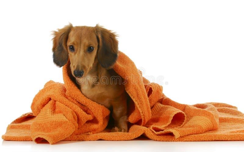 Ванна собаки стоковые фотографии rf