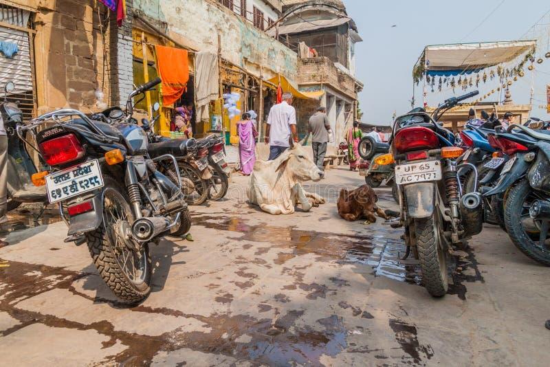 ВАРАНАСИ, ИНДИЯ - 25-ОЕ ОКТЯБРЯ 2016: Взгляд коров и мотоциклов на улице в Варанаси, Ind стоковое изображение rf