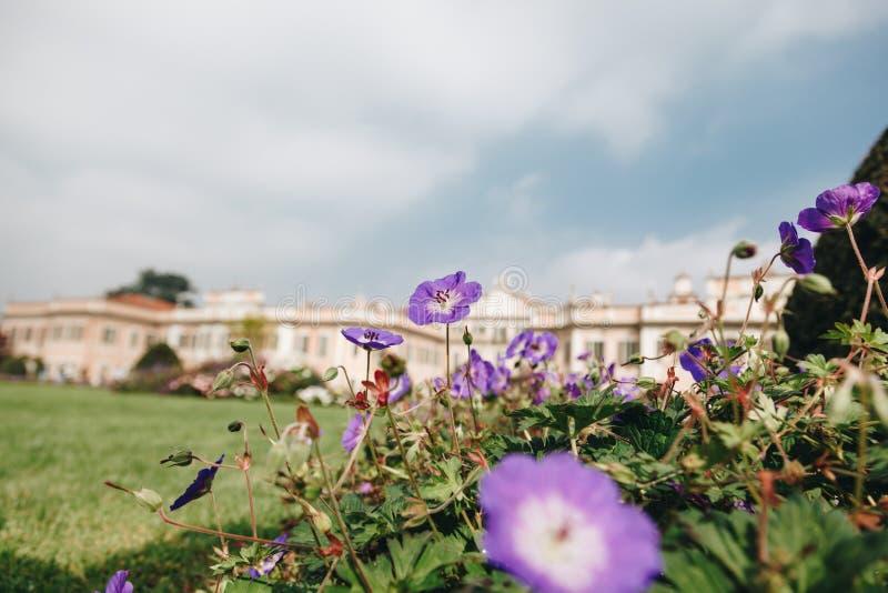 Варезе ОКТЯБРЬ 2018 ИТАЛИЯ - цветки против дворца Estense, или Palazzo Estense стоковые изображения rf