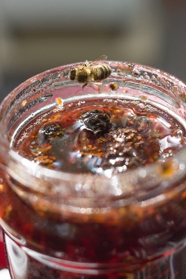 Варенье конуса сосны стоковое фото rf