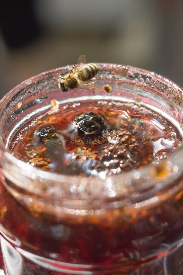 Варенье конуса сосны стоковые фото