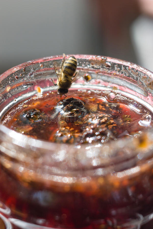 Варенье конуса сосны стоковое фото