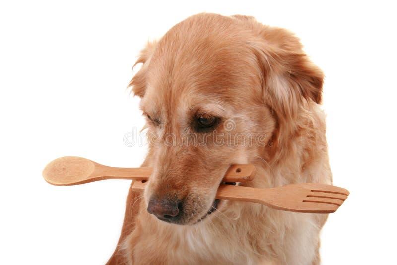 варить собаку стоковые изображения rf