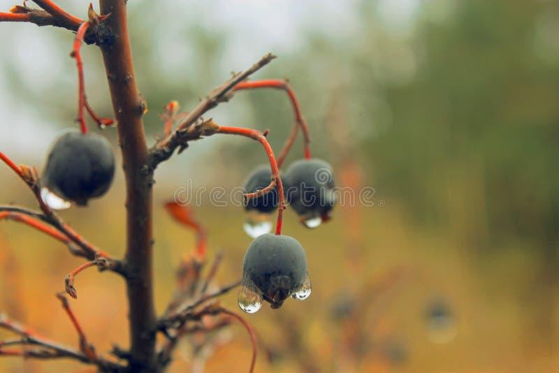 ВАУ! Настолько славные голубые ягоды стоковые фотографии rf