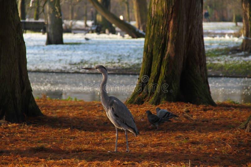 Вахта птицы Амстердама стоковое изображение