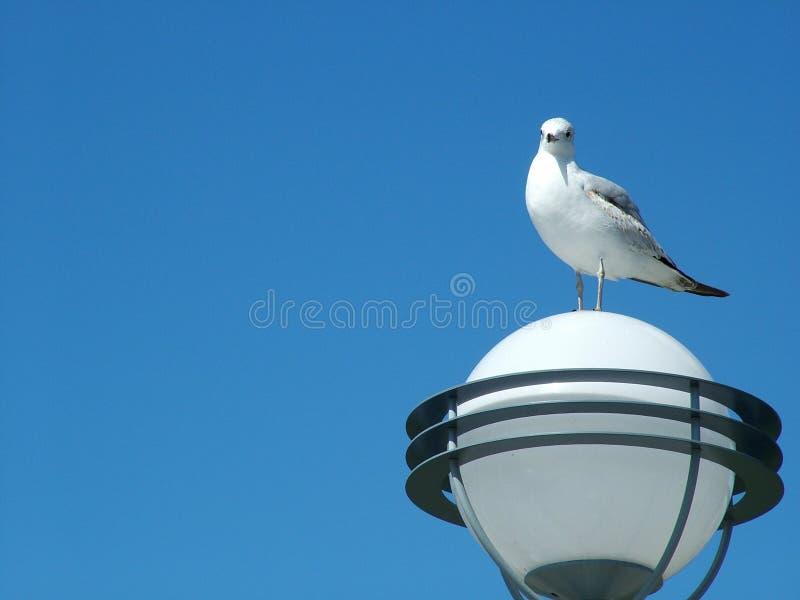 вахта чайки Стоковая Фотография