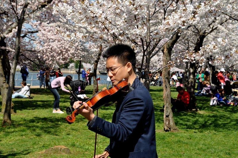 Вашингтон, DC: Азиатский скрипач на приливном тазе стоковое изображение rf