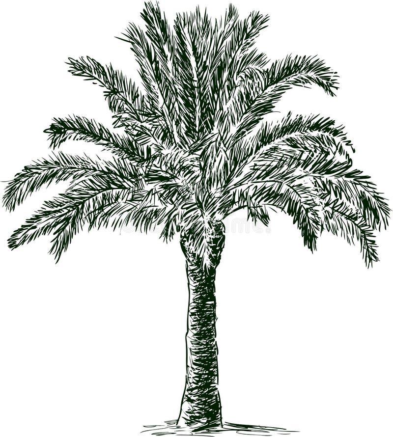 вал ладони острова Корсики среднеземноморской принятый съемкой иллюстрация штока