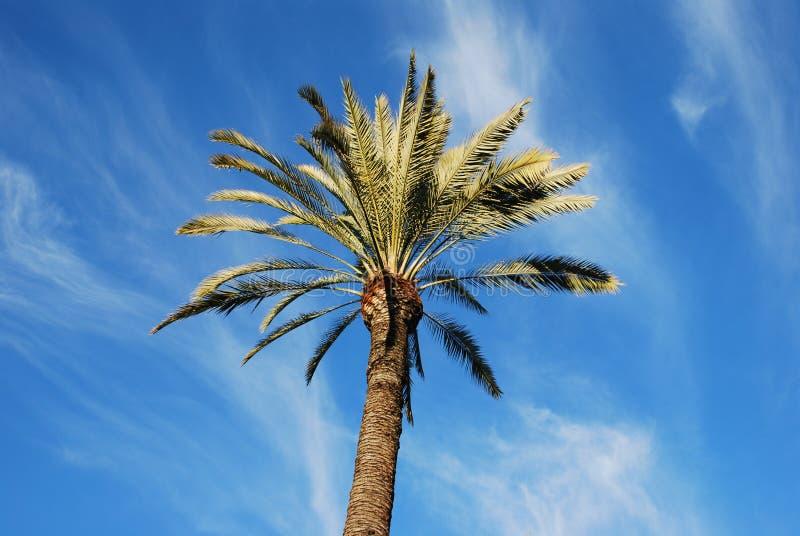 вал ладони острова Корсики среднеземноморской принятый съемкой стоковое изображение rf