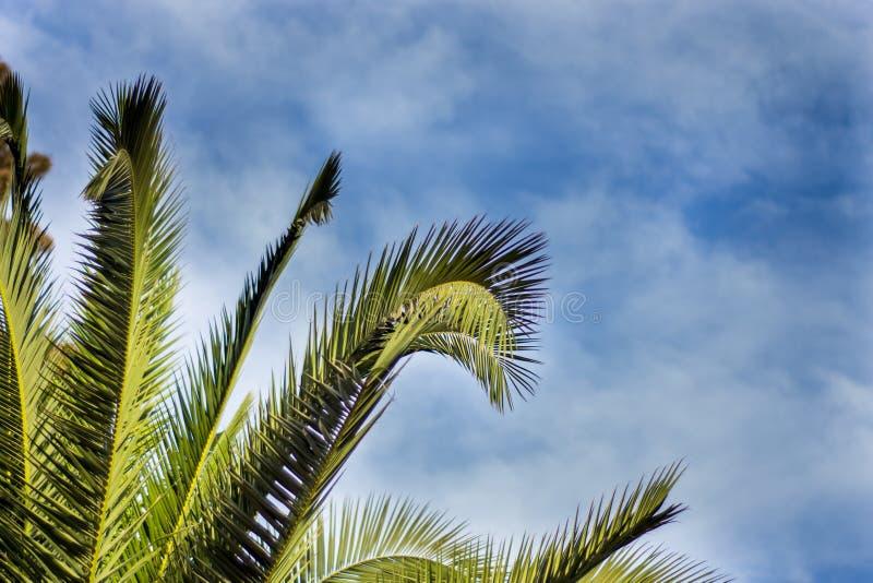 Download вал ладони острова Корсики среднеземноморской принятый съемкой Стоковое Изображение - изображение: 91998739