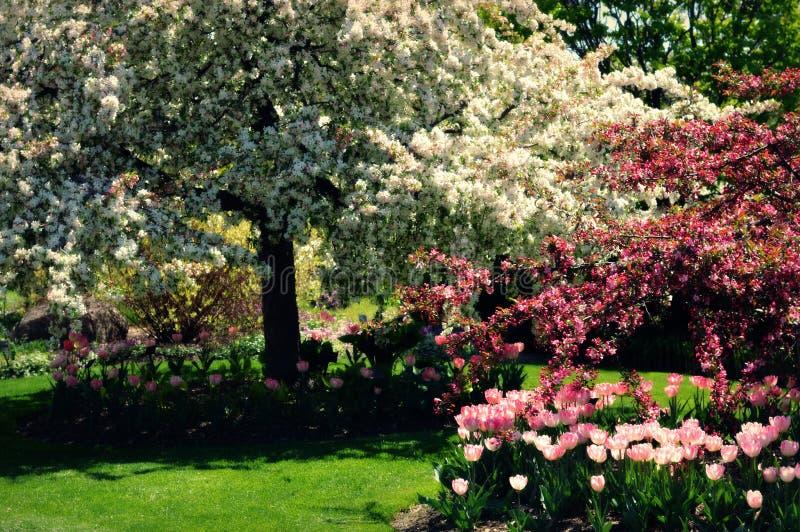 вал весны ветви цветений цветеня яблока стоковое фото