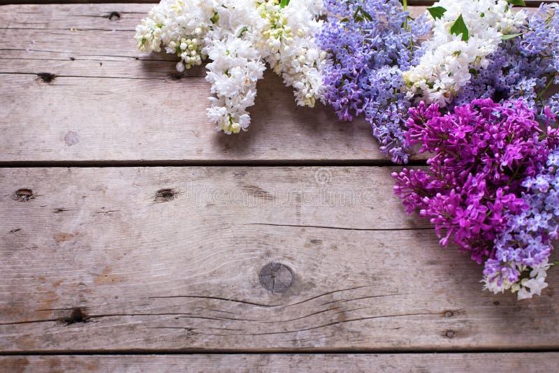 вал весны японии вишни предпосылки зацветая близкий флористический вверх Свежие ароматичные цветки сирени на vinta стоковые изображения rf