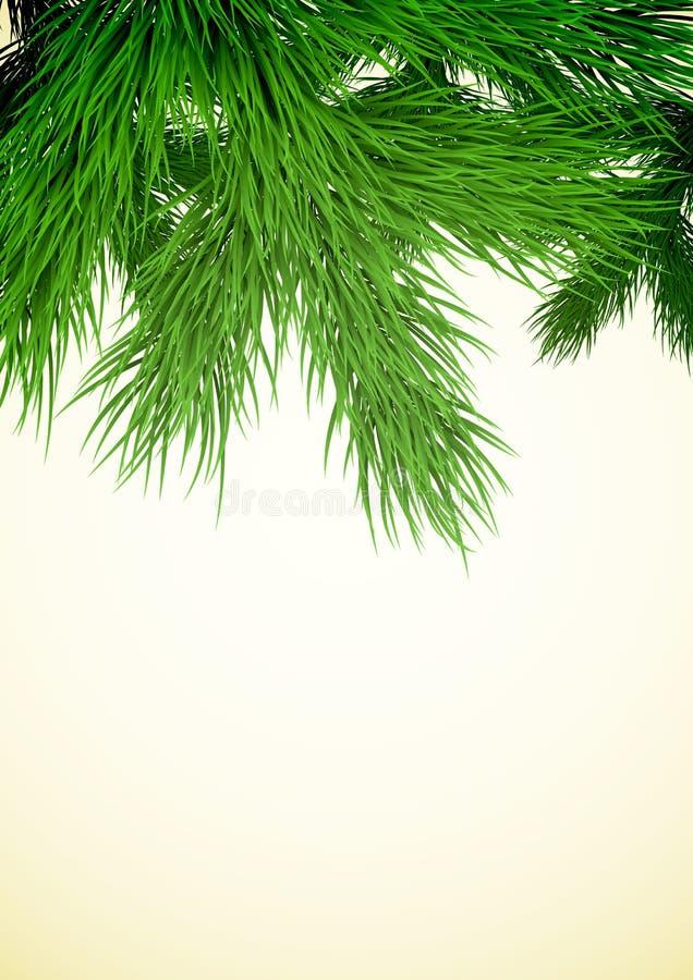 вал ели ветви близкий вверх бесплатная иллюстрация