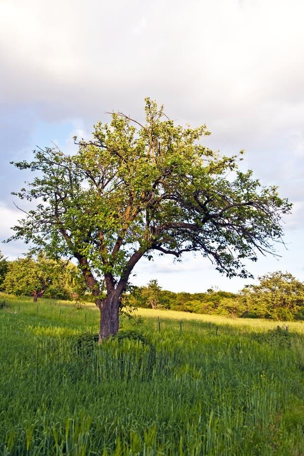 Download вал захода солнца зеленого цвета травы Стоковое Изображение - изображение насчитывающей облако, напольно: 40587243