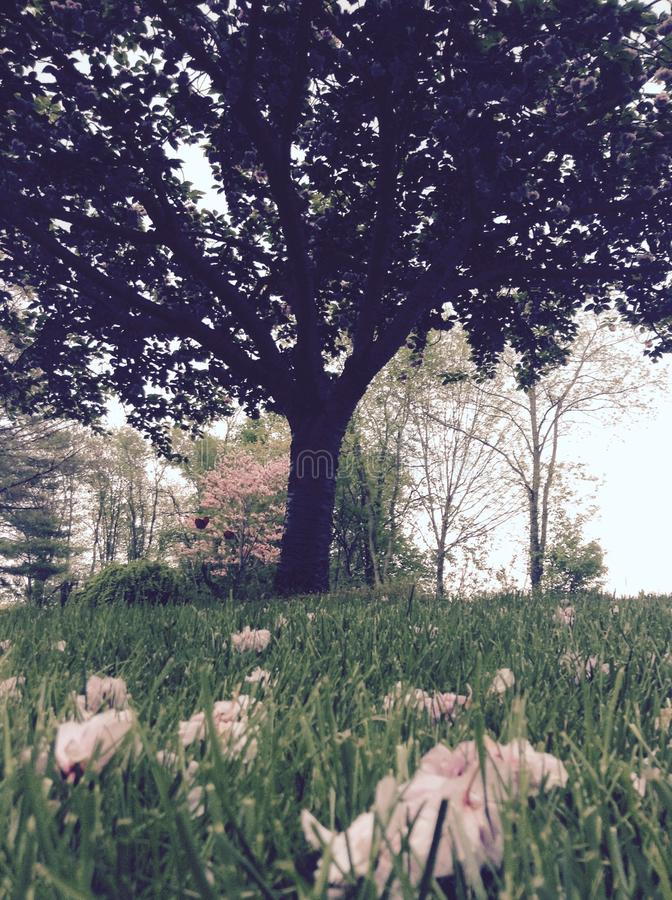 вал листва цветения предпосылки померанцовый стоковое фото rf
