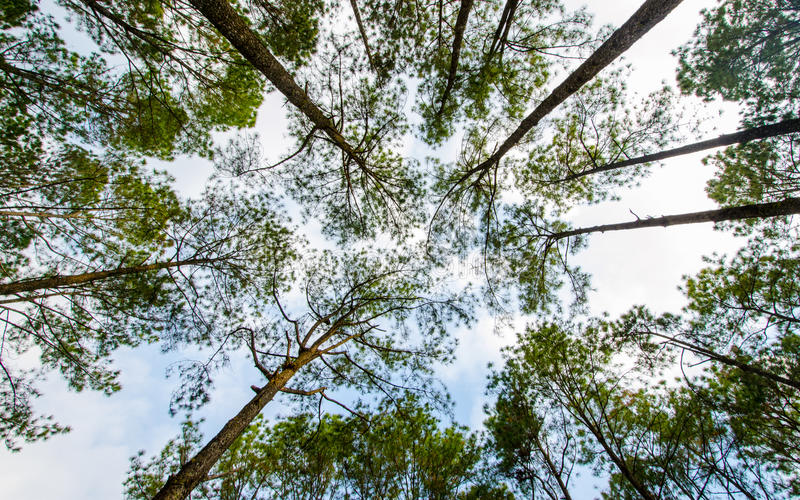 Вал и листья стоковое изображение rf
