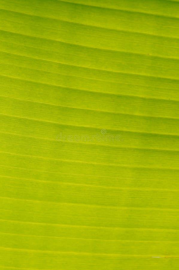 вал разрешения банана стоковая фотография