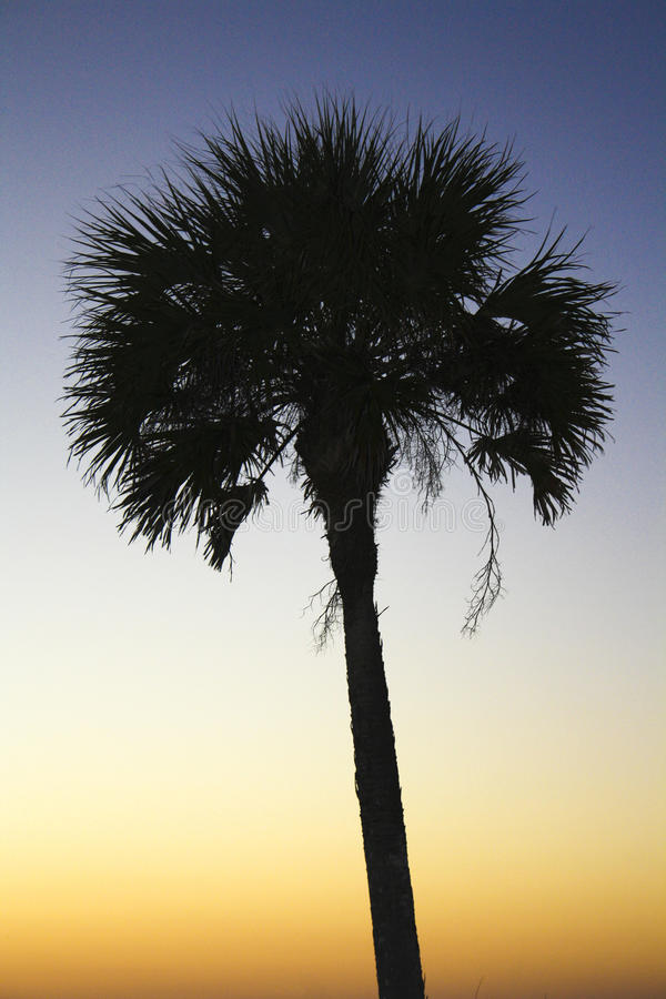 Download вал силуэта ладони стоковое фото. изображение насчитывающей outdoors - 40585350