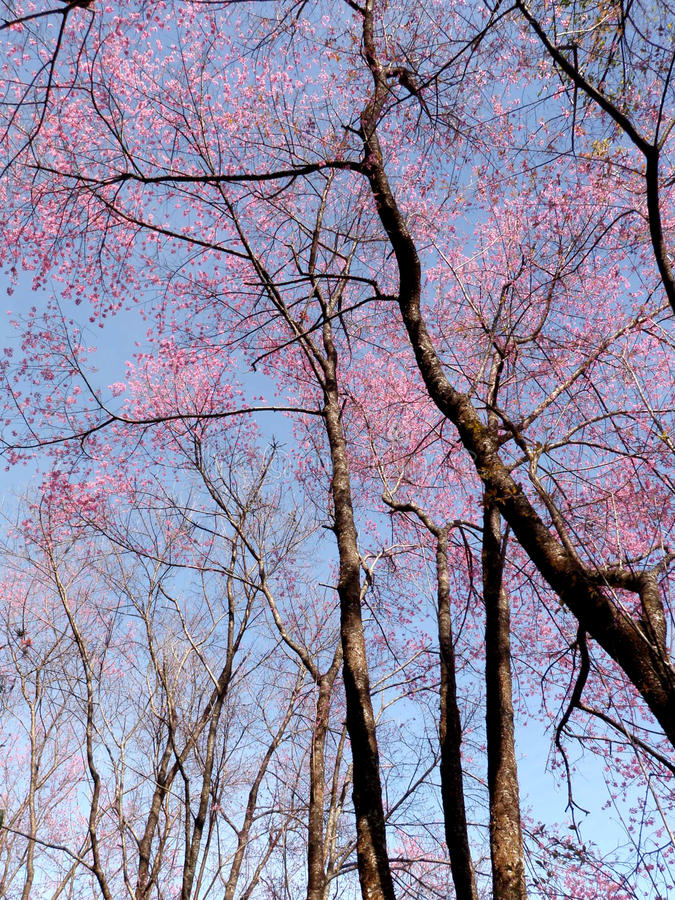 вал цветка розовый стоковые фотографии rf