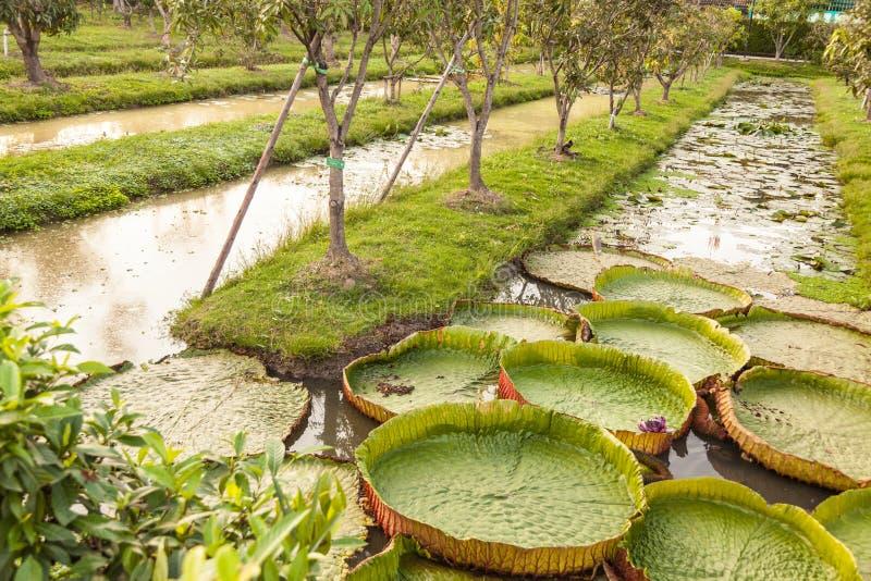 валы зеленого цвета травы стоковые изображения rf