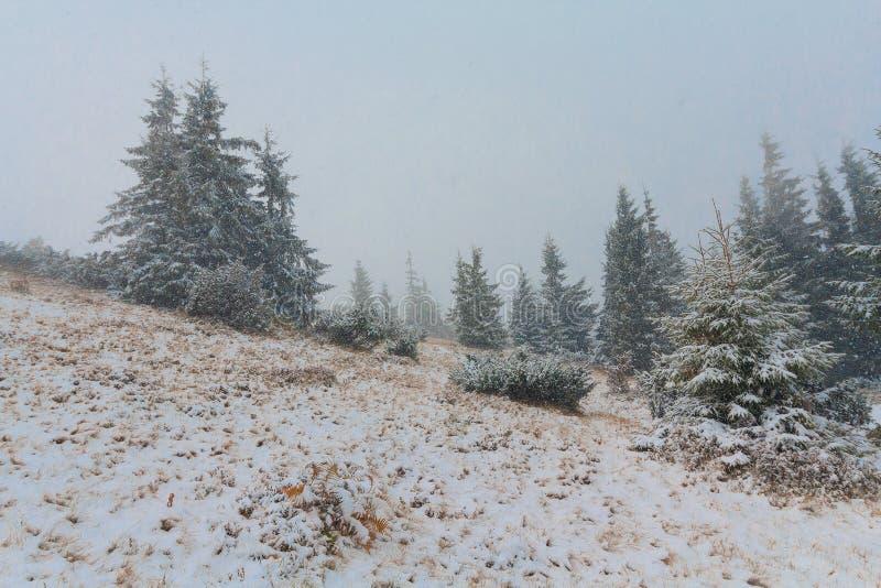 Download валы снежка сосенки стоковое изображение. изображение насчитывающей сценарно - 81802283