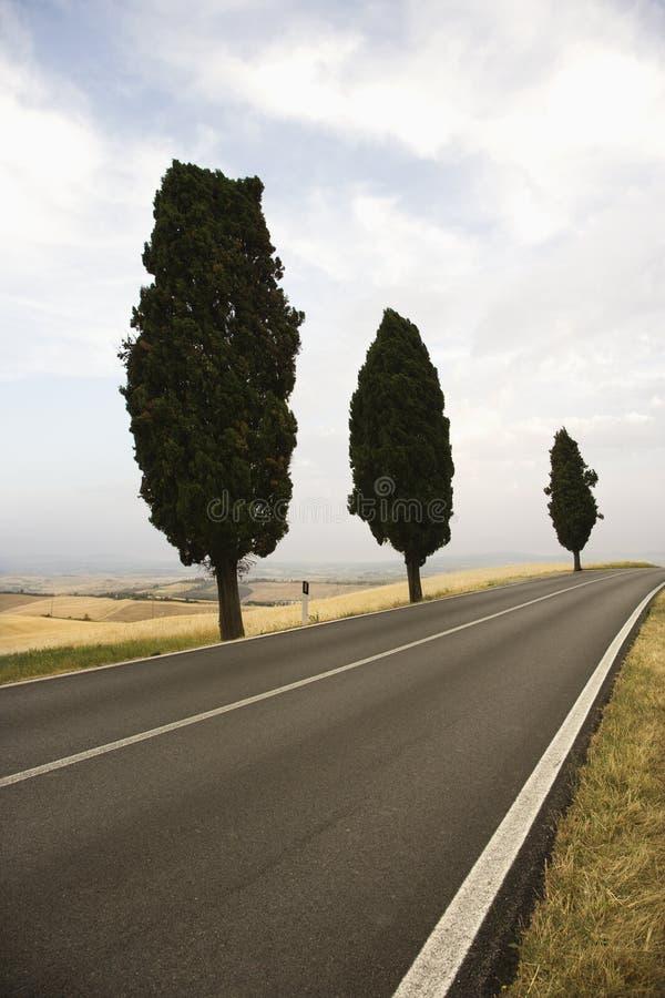 вдоль валов дороги кипариса среднеземноморских стоковые изображения rf