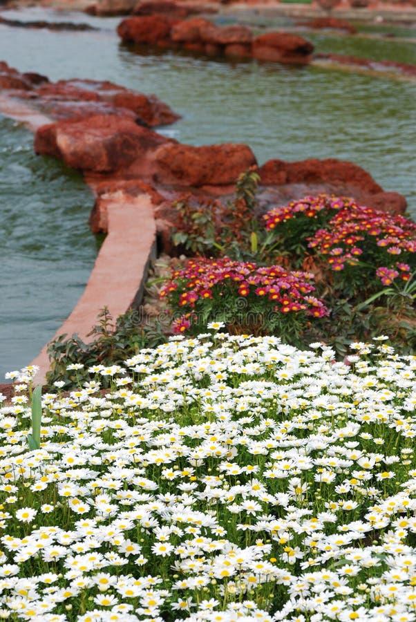 вдоль камня реки цветка стоковое изображение rf