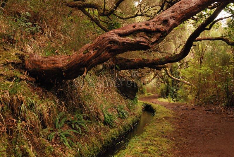 вдоль hiking тропка Мадейры levada стоковое изображение rf