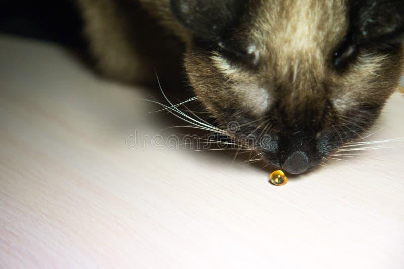 Вдохи кота на капсуле медицины стоковое изображение rf