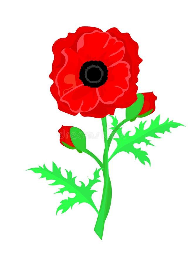 Веб Иллюстрация вектора яркого цветка мака Символ день памяти погибших в первую и вторую мировые войны бесплатная иллюстрация