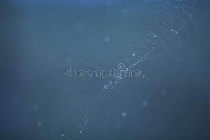 Веб стоковое изображение